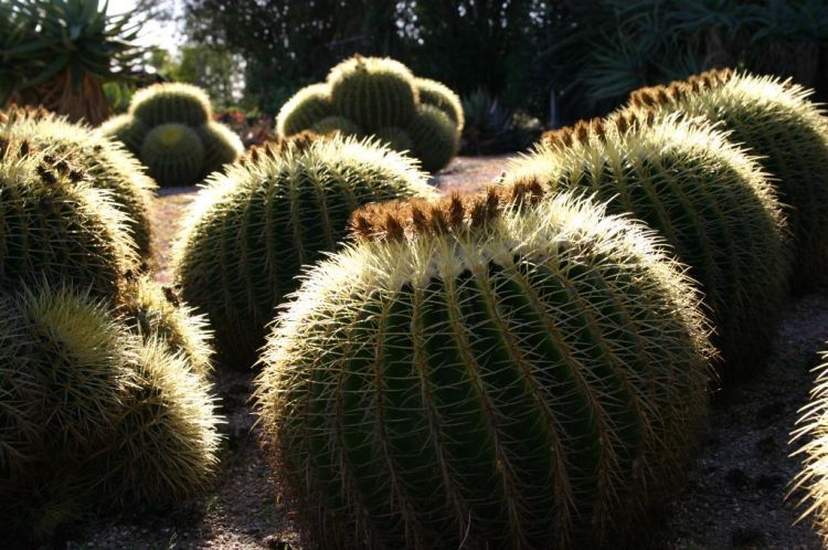 Photo: Debra Lee Baldwin via the Los Angeles Times. Click on the cactus to be taken to Baldwin's article.