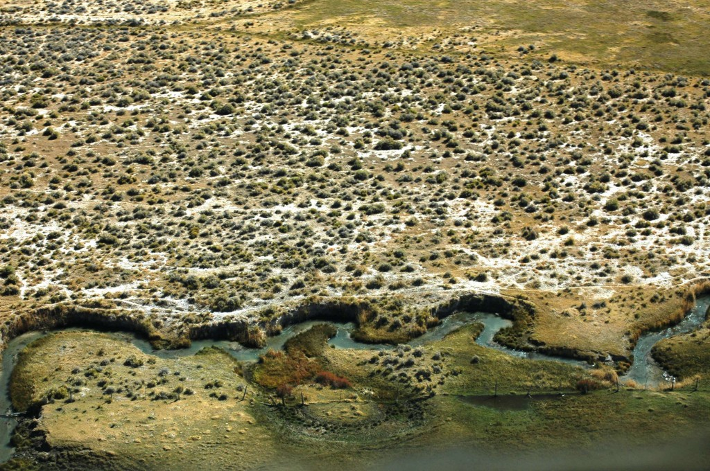 A Snake Valley stream flowing from Big Springs near Baker, Nevada. Aerial photo: Terry Marasco