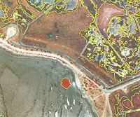 The Spartina project uses aerial photography and GPS to monitor cordgrass in the San Francisco Bay. Source: California Invasive Plant Council