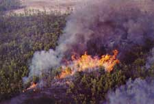 Damaging forest fire in heavy rough. Source: Bugwood.org