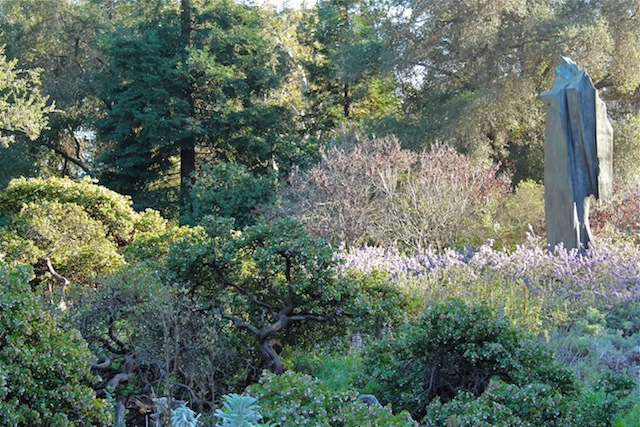 Manzanita and California lilac in Rancho Santa Ana Botanic Garden. Photo: Emily Green