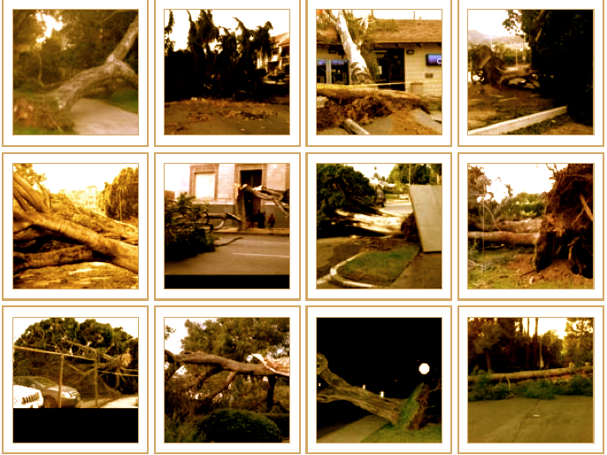 Tree Failure Report. Source: University of California