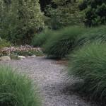 David Fross's garden at Native Sons Nursery in Arroyo Grande, CA