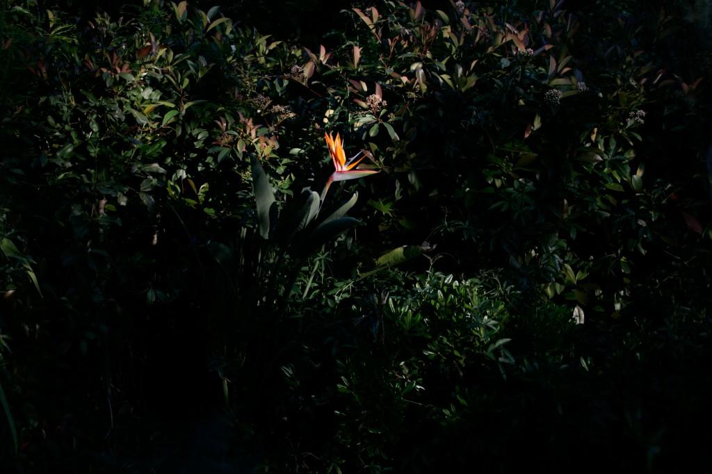 Emily Green Garden-169