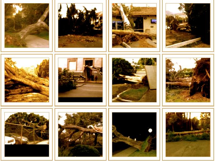 Tree Failure Report. Source: University of California